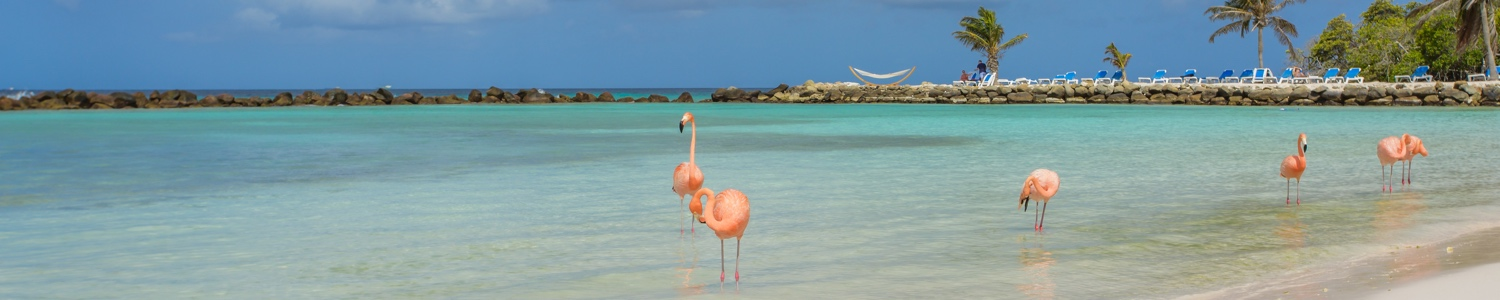 Image of Aruba Beach, which is a luxury Caribbean holiday destination that Caribbean Boutique are proud to book to.
